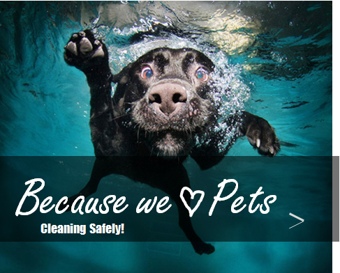 because we love pets5-home